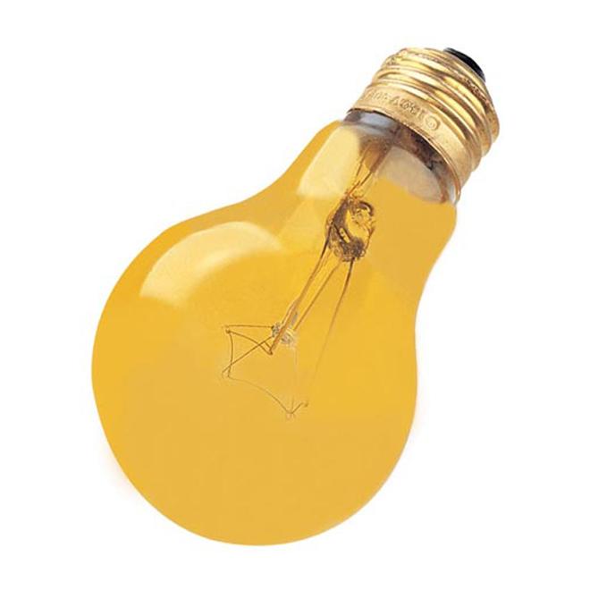 Ampoule domestique A19