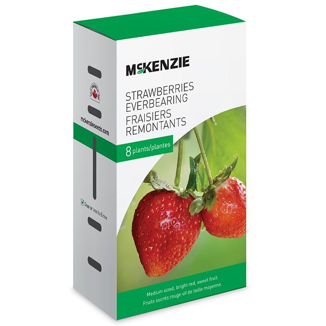 Fraisier rouge comestible, McKenzie, racines