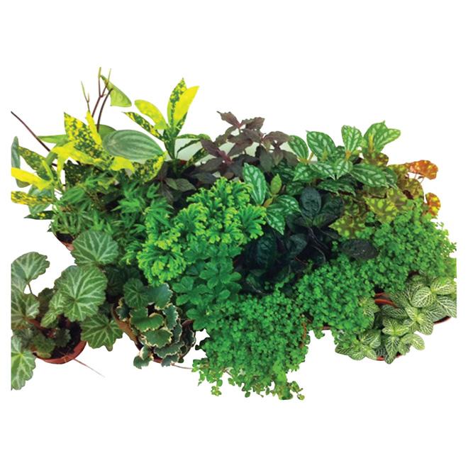 """Plante tropicale assortie, pot de 2 1/2"""""""