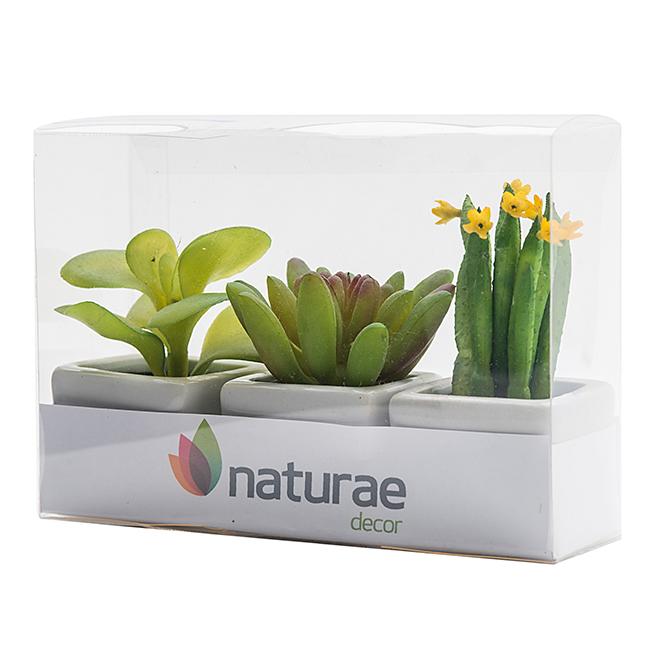 naturae decor plantes trio de mini plantes grasses en pots de c ramique r no d p t. Black Bedroom Furniture Sets. Home Design Ideas