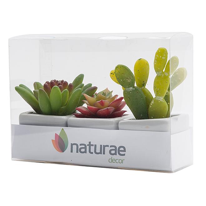 naturae decor plantes trio de mini plantes grasses en. Black Bedroom Furniture Sets. Home Design Ideas