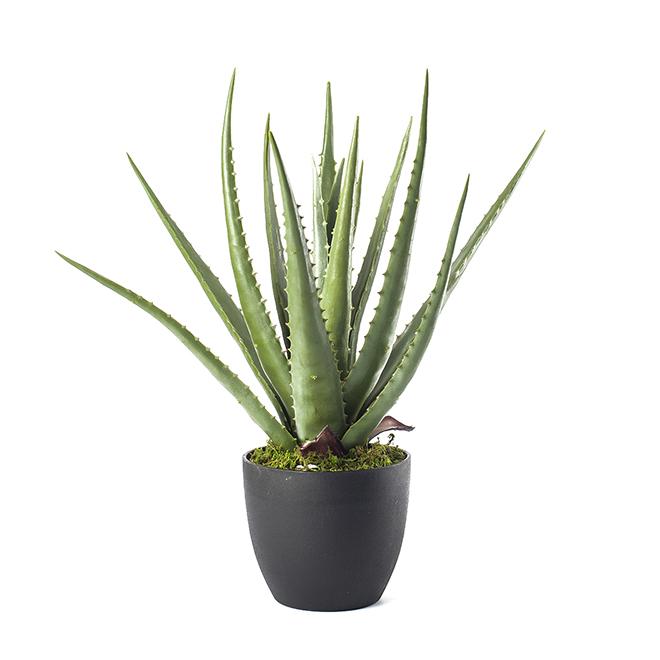 naturae decor plante artificielle en pot de plastique alo s 18 pp18 aloe 6r r no d p t. Black Bedroom Furniture Sets. Home Design Ideas