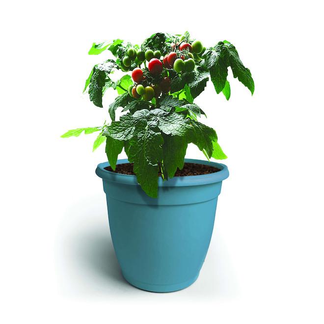 Plant de tomates assortis Mini Kitchen Siam, pot de 8 po
