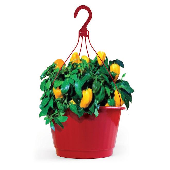Plant de piments, panier suspendu de 10 po