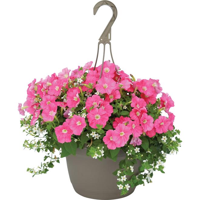 Panier suspendu Premium, Fernlea Flowers 10 po couleurs assorties