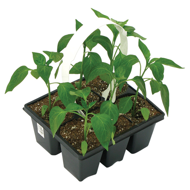 Vegetable Plant - 6-Pack