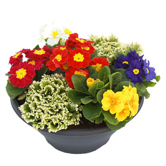 Annual flower bowl
