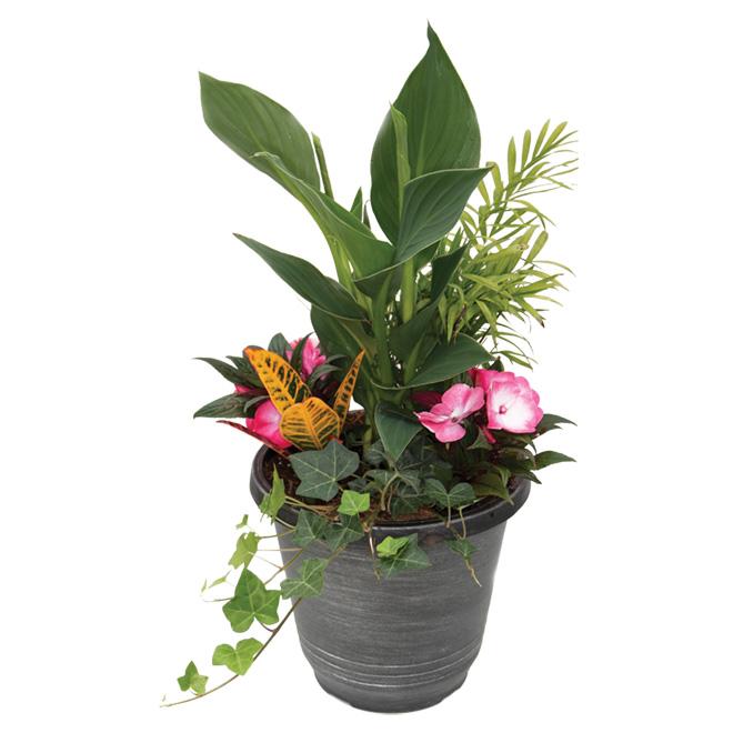 Jardinière tropicale