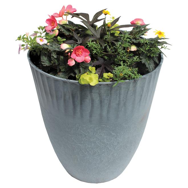 Plante 14 po couleur assortie