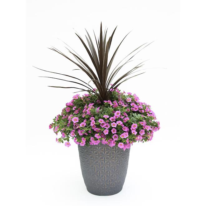 Cecil Annual Planter - 14-in Pot - Assorted