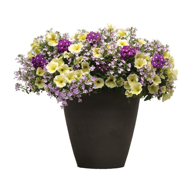 Arrangements assortis de fleurs annuelles, pot de 14 po