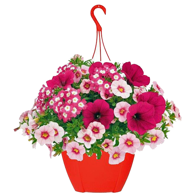 "Hanging Basket - Annual Flowers - 10"" Pot"