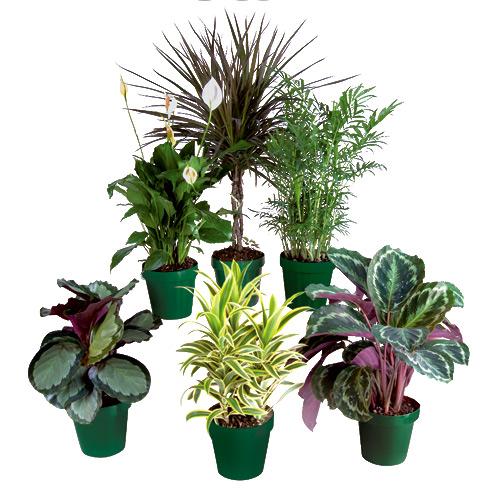 """""""Premium"""" tropical plants"""
