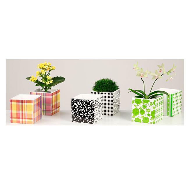 """Mini Ceramic Planter Pot - 2.5"""" - Assorted"""