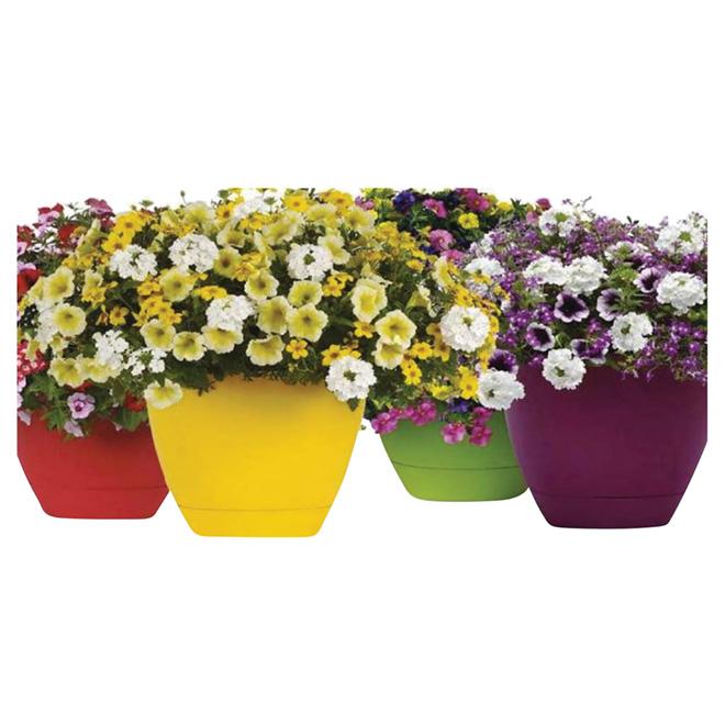 Assorted Annuals - Plastic Patio Planter - 12-in