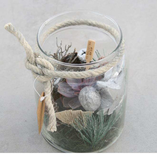 Succulent en vase Foliera, transparent
