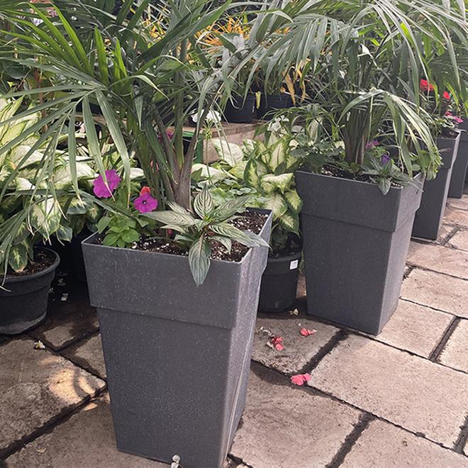 Palm Plant - 18-in Patio Pot