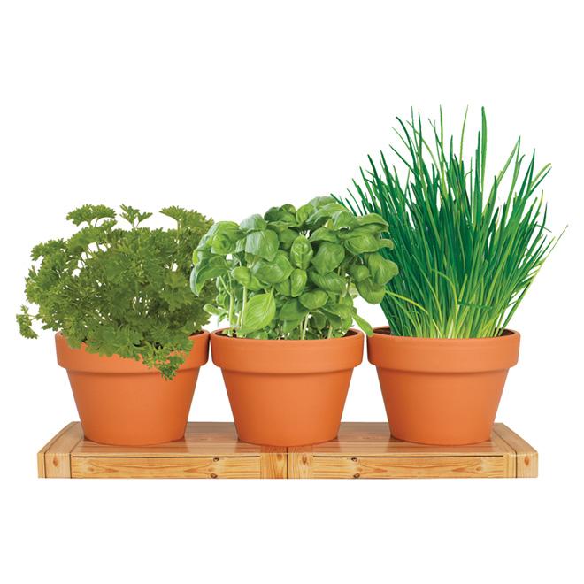 Trio herbes aromatiques d'intérieur, bulbes