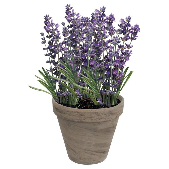 TotalGreen - Lavender Grow Kit