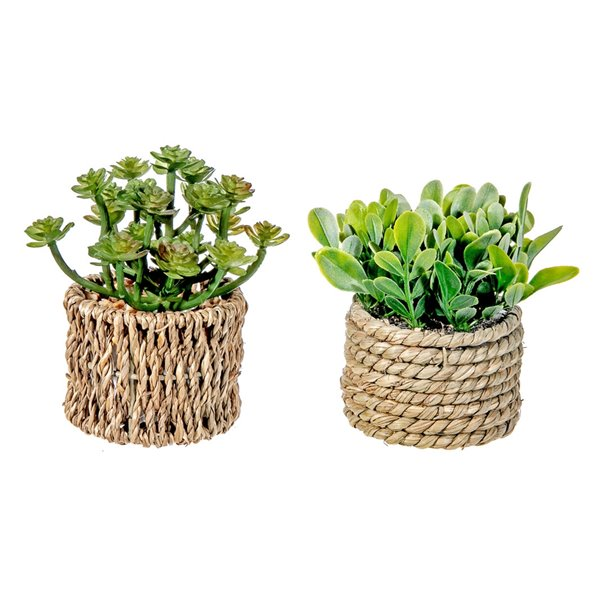 Pot de succulentes artificiel 3,35 po x 4,35 po de IH CASADECOR